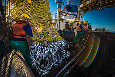 The South African trawl fishery has secured MSC accreditation for a further five years. (Photo courtesy of MSC South Africa)