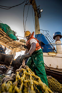 Economic studies have shown that by fishing sustainably, the trawl fishery has effectively retained as many as 12 000 jobs. (Photo courtesy of Sea Harvest)